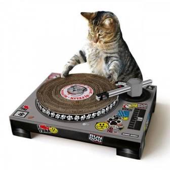 suckuk-cat-scratch.1540912518