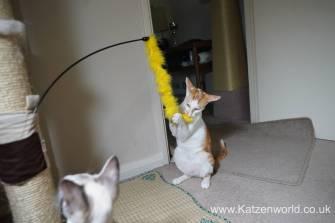 Katzenworld scratch tree cuff0004