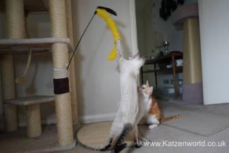 Katzenworld scratch tree cuff0005