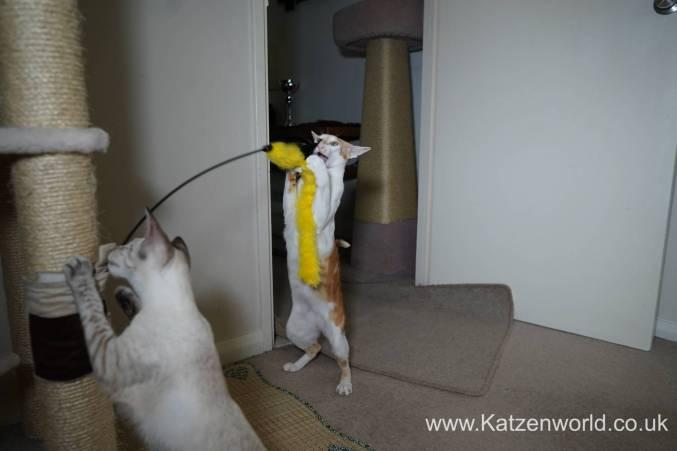 Katzenworld scratch tree cuff0012