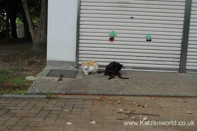 Katzenworld Fukuoka Street Cats0002