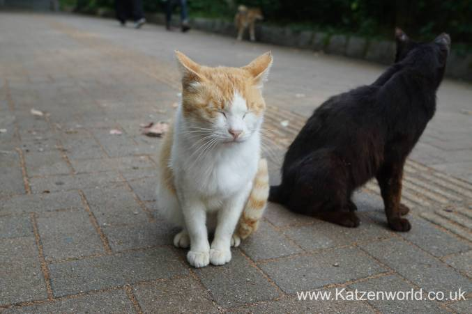 Katzenworld Fukuoka Street Cats0006