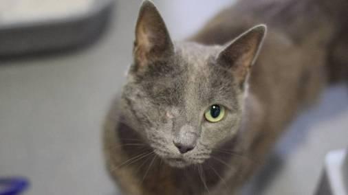 Nick Furry cat