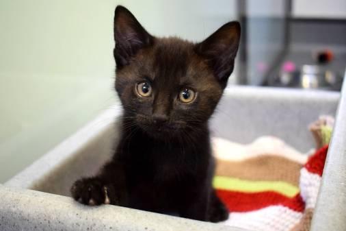 Star-Lord kitten