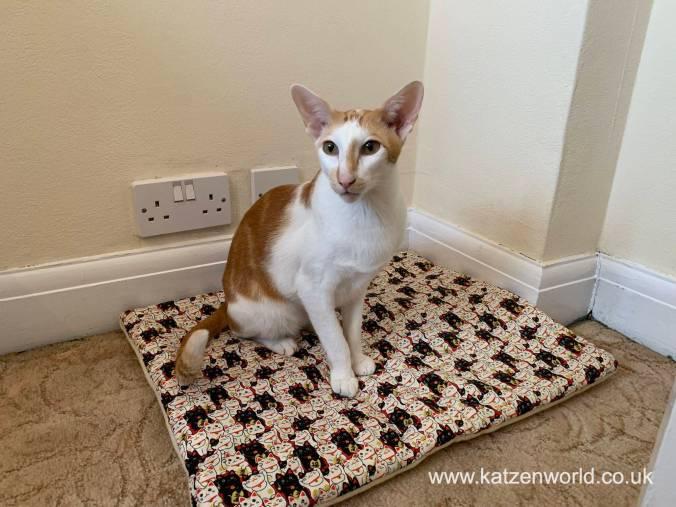 Katzenworld Cat Zen Mat0000
