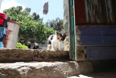Mustapha's kitten garden - new arrival!-2