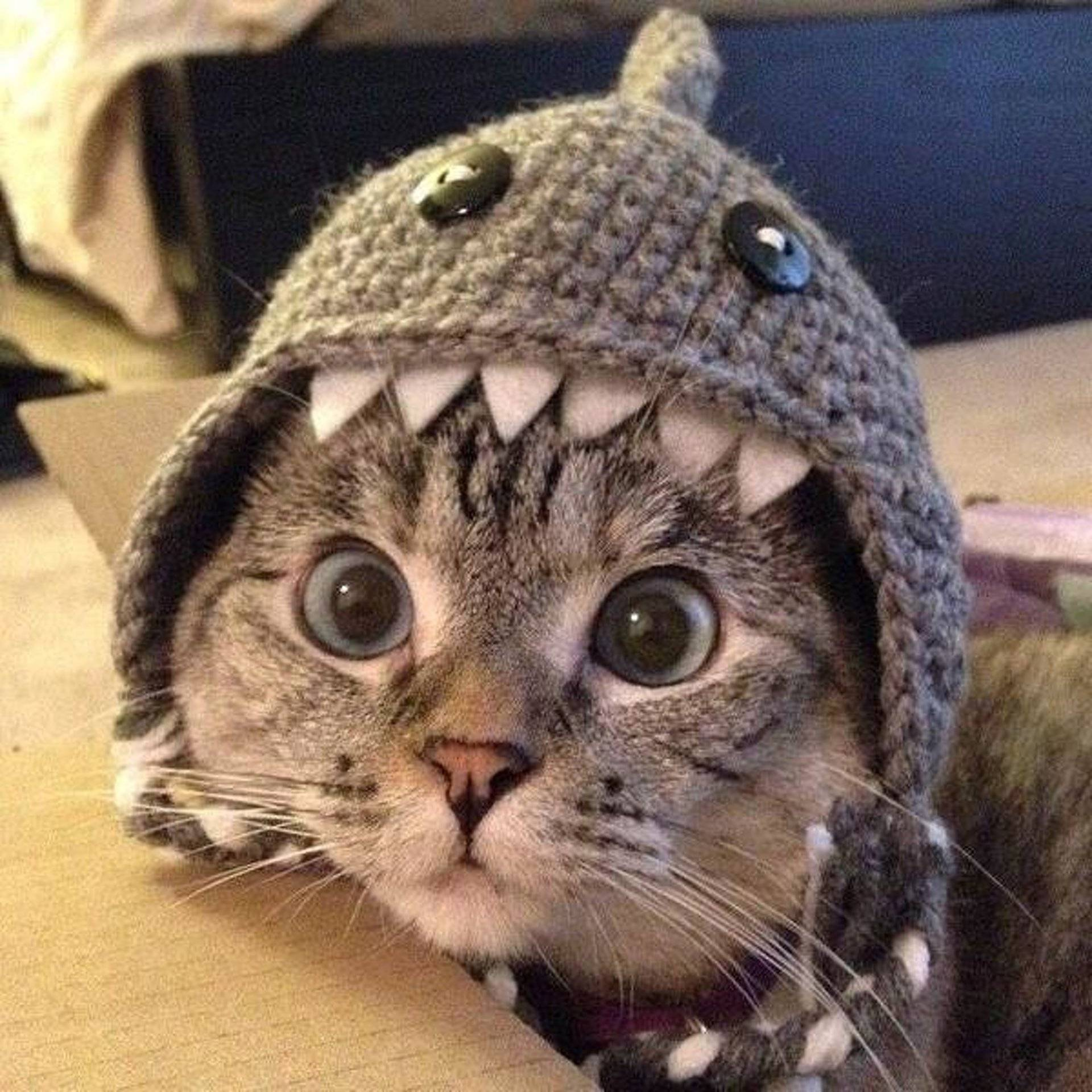 Mews: Funny cat picture collection! - Katzenworld