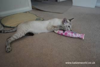Katzenworld Japanese cat toy0012