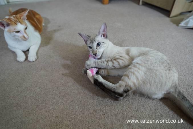 Katzenworld Japanese cat toy0024