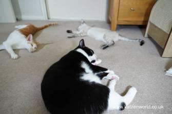 Katzenworld Japanese cat toy0035