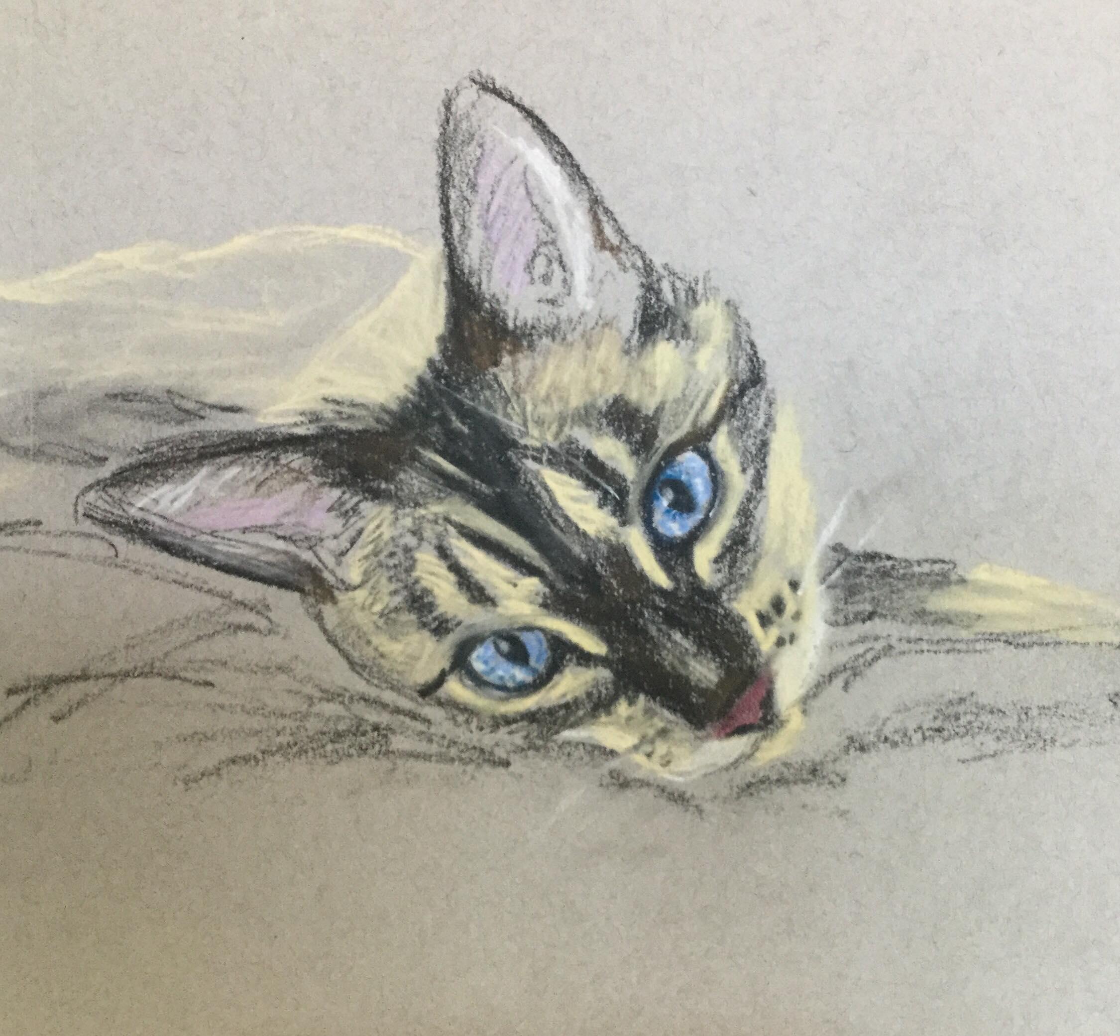 "The Friday Art Cat: ""Pastel Bengal"""