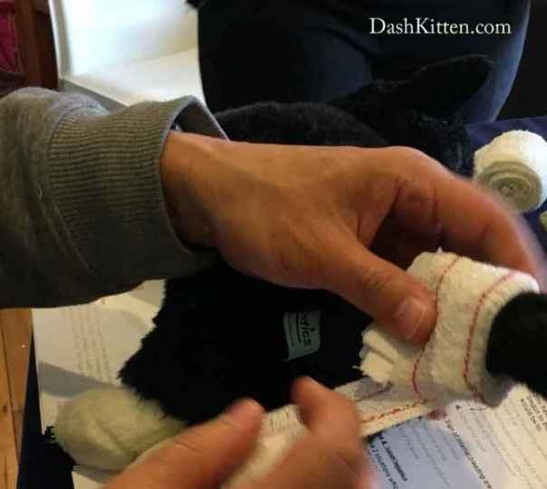 Cat first aid bandaging skills.