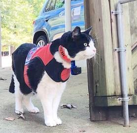 Lost Cat Finder Henry at gate