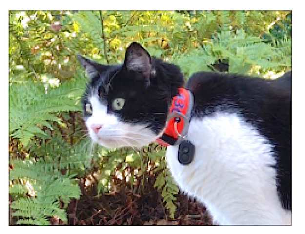 henry collar ferns