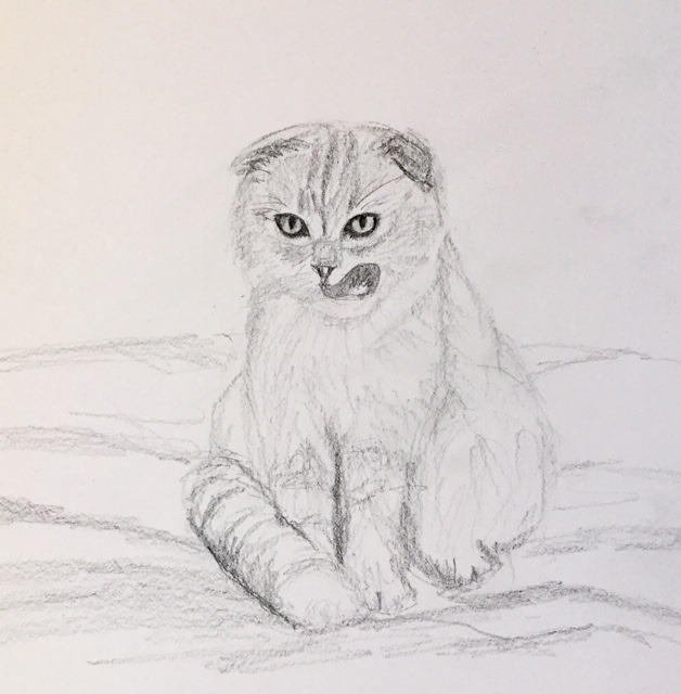 "The Friday Art Cat: ""The Scottish Fold"""