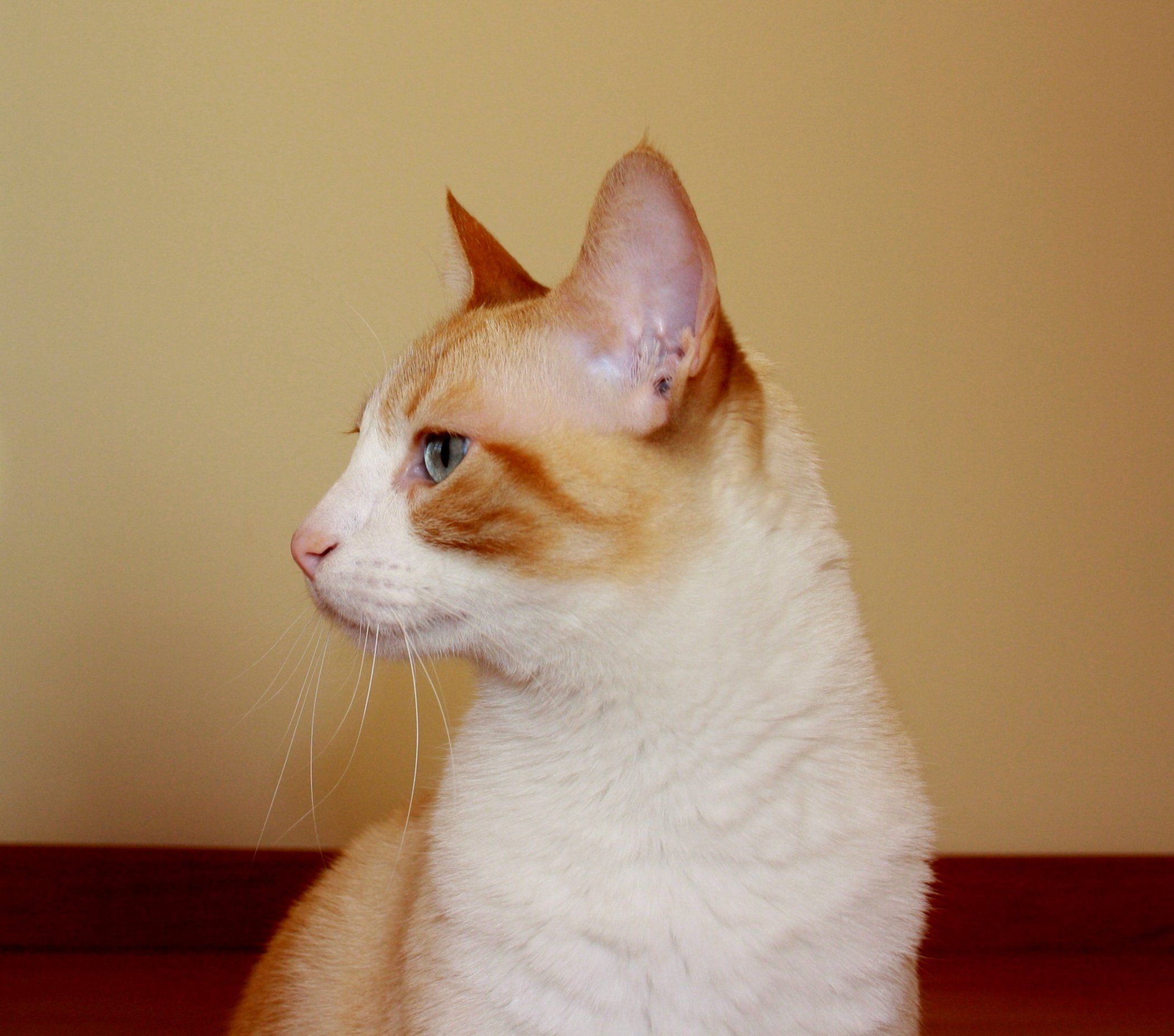 Purrsday Poetry: Mr. Cat