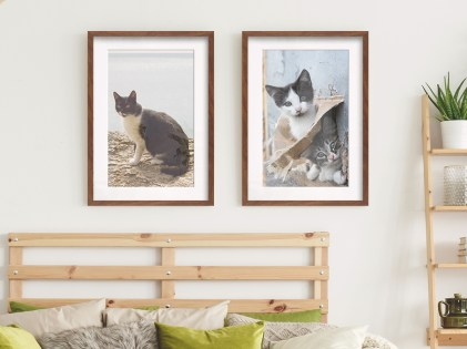 cats framed photo