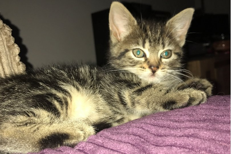 Family cat Suffers Fatal Injuries After Being Shot With air gun in Barnsley