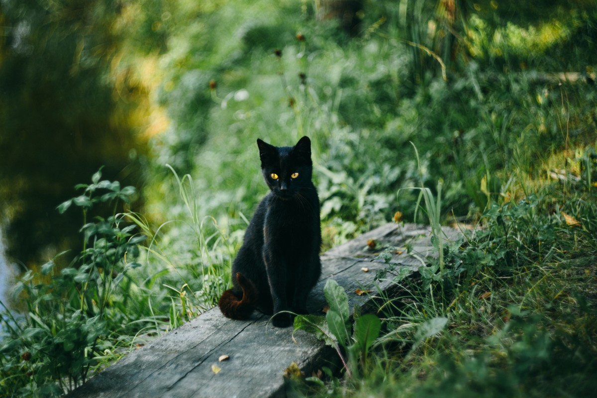 Keeping Cats Safe: Lilies