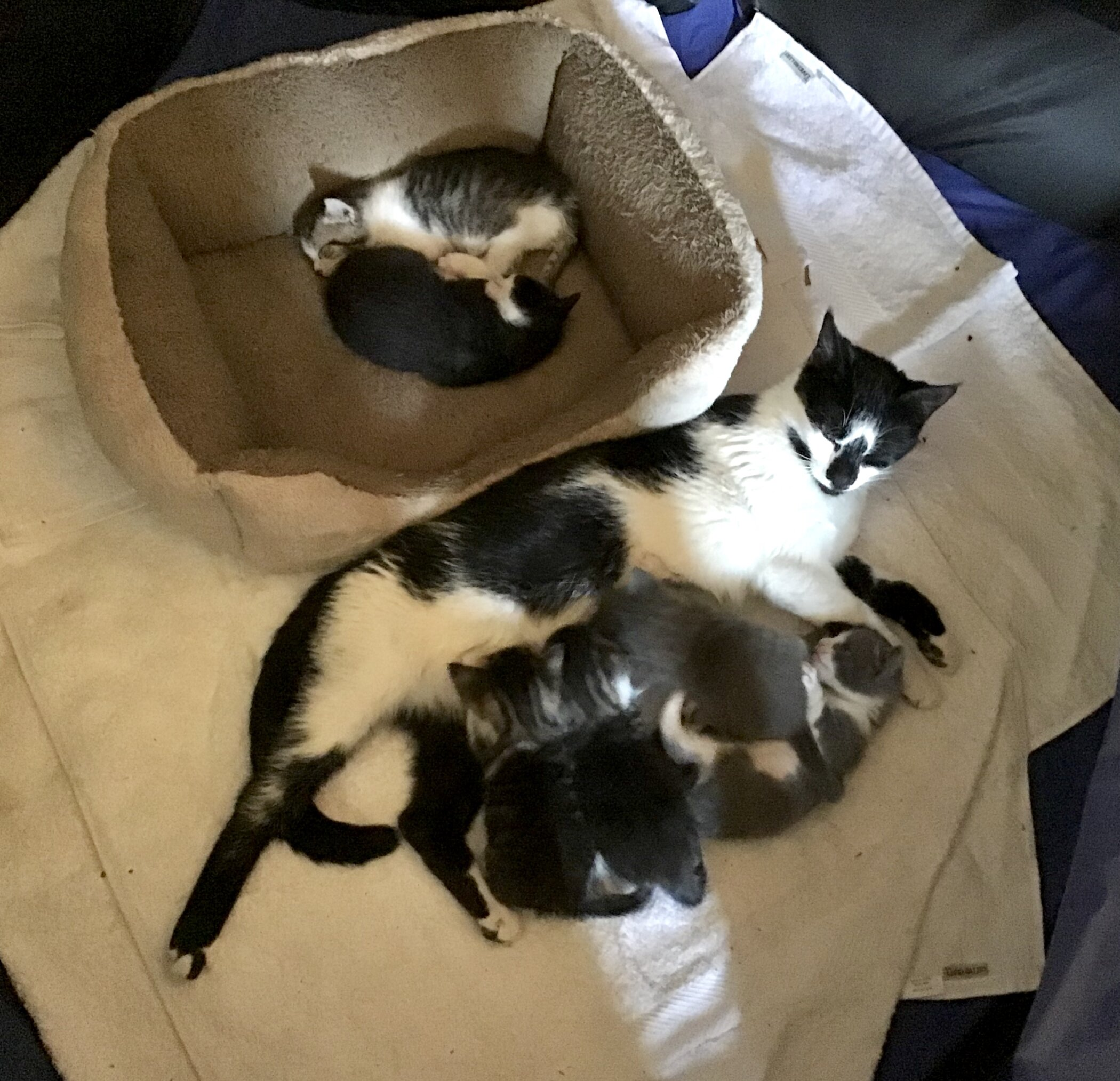 Guest Story: The Rescue Cats