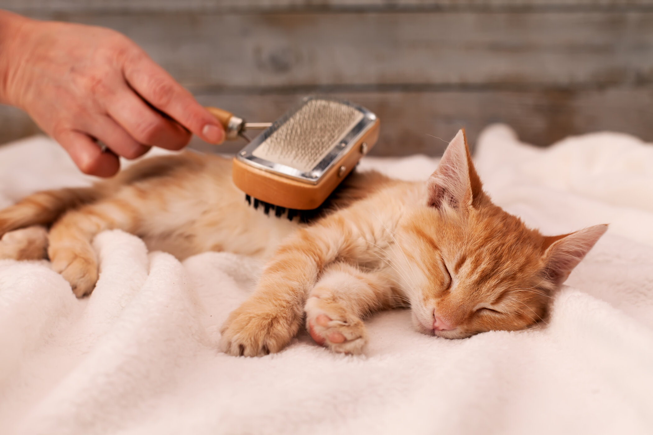 The Biggest Differences Between Dog Grooming And Cat Grooming Katzenworld