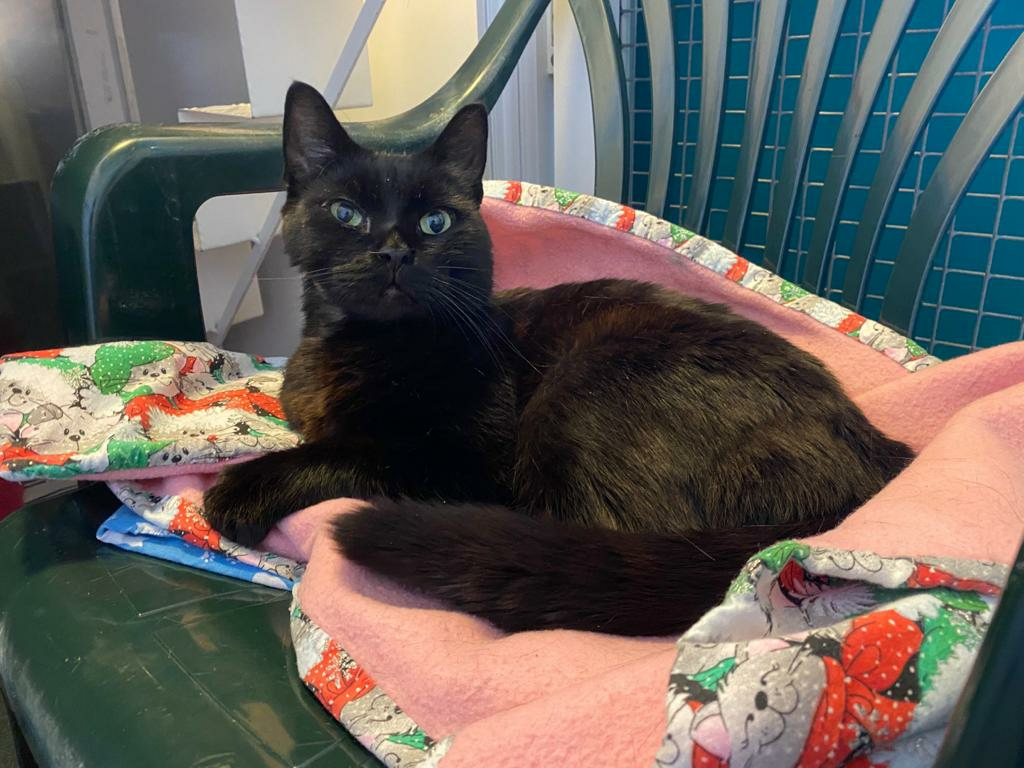 """""""The cat With Nine Lives"""": Lucky Kali Saved by Mayhew After he Swallowed a Needle and Thread"""