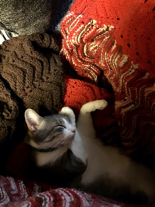 A cat lying on a bed Description automatically generated