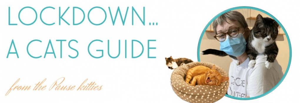 Lockdown, a cats guide