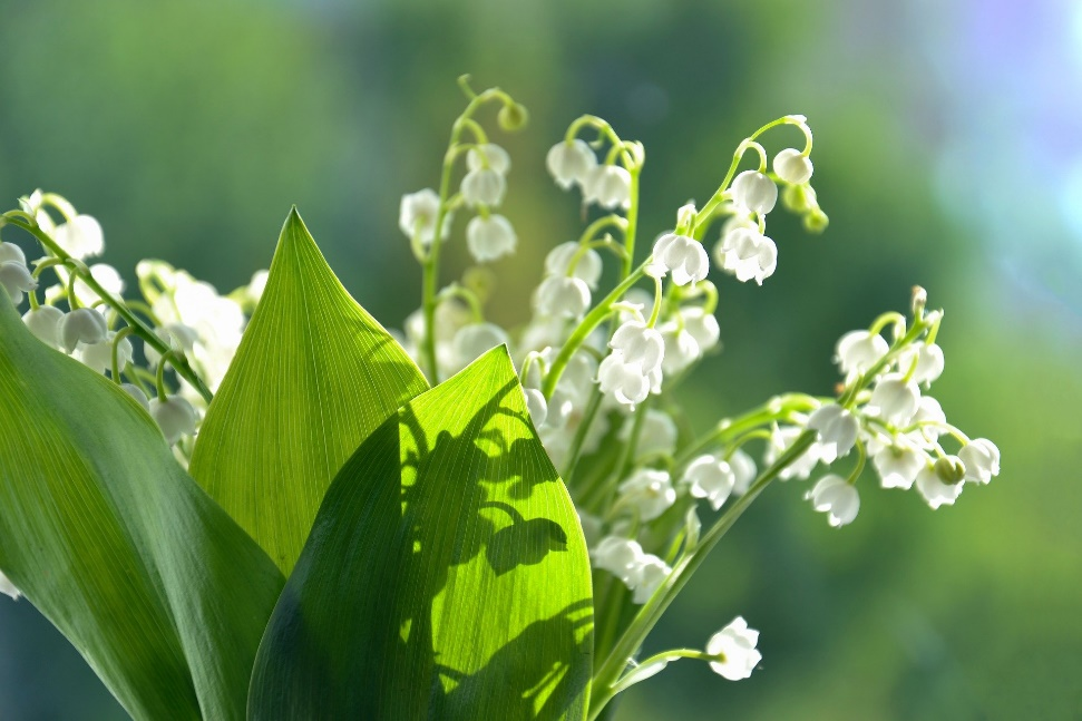 A picture containing plant, tree, flower Description automatically generated
