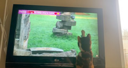 A picture containing text, television, cat, grass Description automatically generated