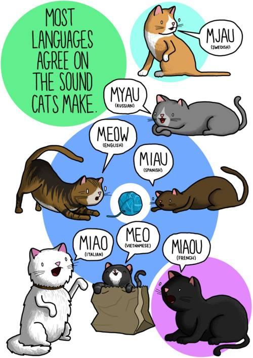 cat noises2