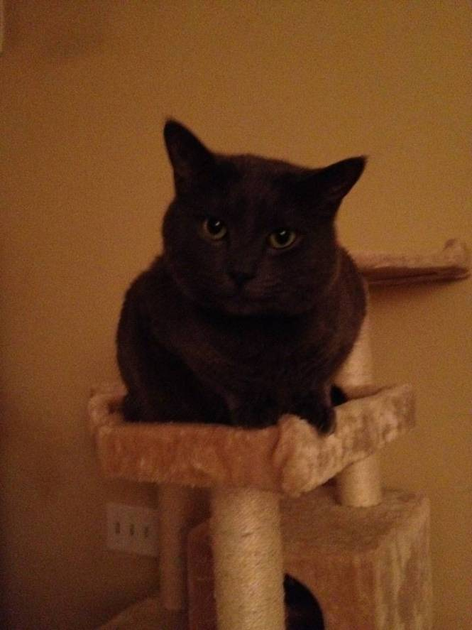 cats on tummy rub tuesday by katzenworld