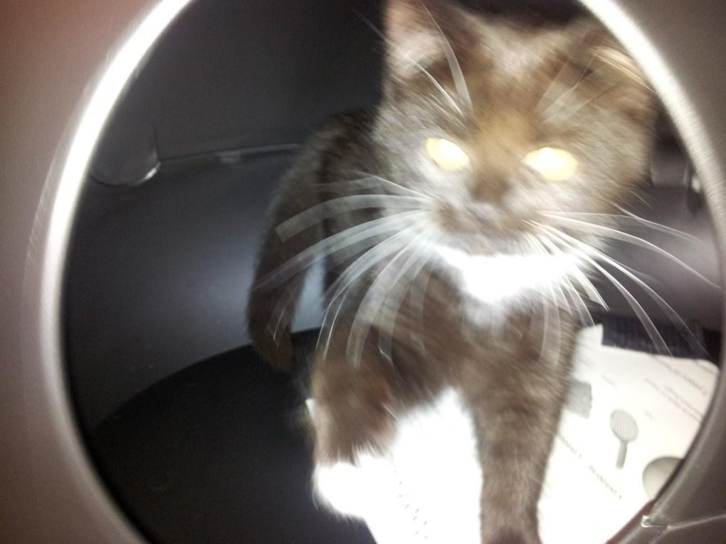 Zelda and the toilet