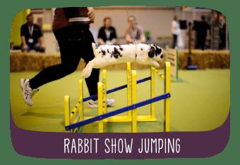 tv_rabbit_show_jumping