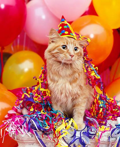 Guest Post Practical Gift Ideas For A Cats Birthday Party