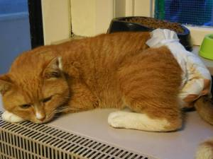 Moby: FIV, Paralyzed tail and bladder
