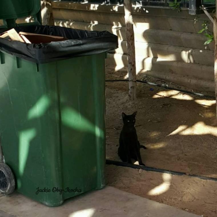 black cat and I