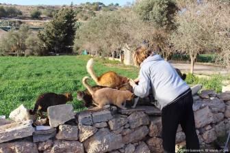 Malta - Xemxija 1 - ©2016 Islands of Cats 2