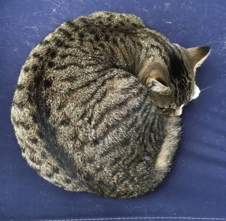leo-curled-up