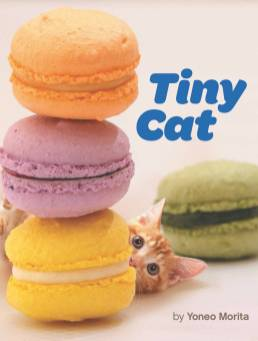 tiny-cat_cover