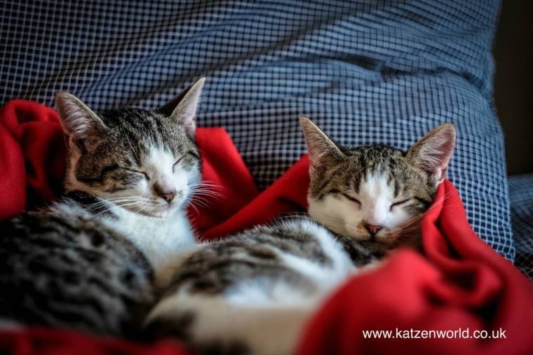 cats-on-blanket