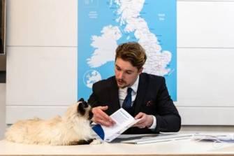 cat estate agent 3