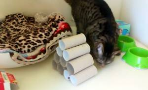 Cat Danaerys seeks out biscuits hidden in pyramid toy © RSPCA