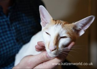 Katzenworld Frontline PetCare animed direct 0006