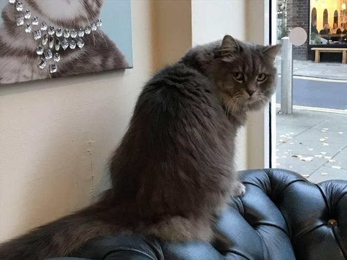 KittyCafeNottingham-27