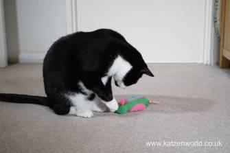 Katzenworld bowless feeder0028