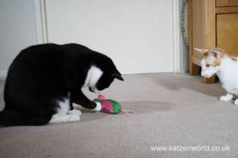 Katzenworld bowless feeder0035