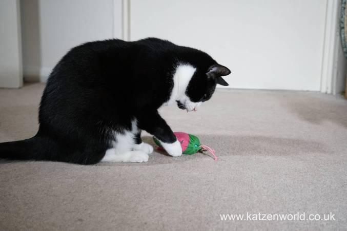 Katzenworld bowless feeder0037
