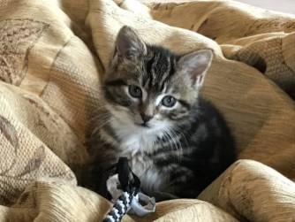 Cat_lounge_dublin-045