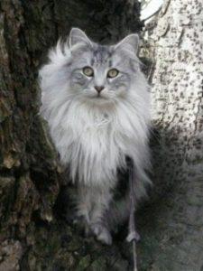 Cat-behavior-consultations-239x318-225x300.jpg